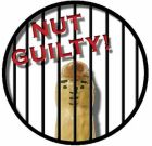 Nut Guilty